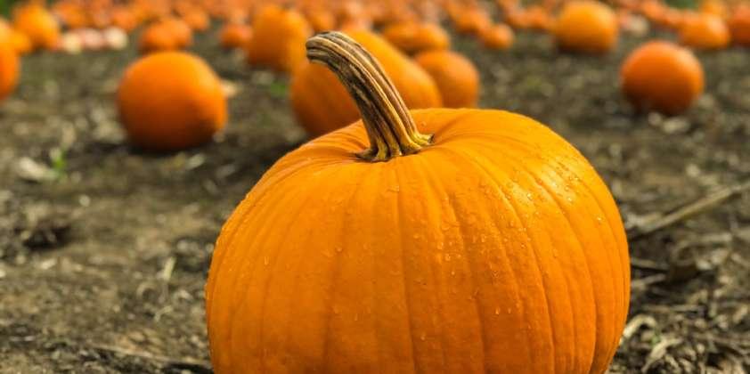 Aktionen im Oktober